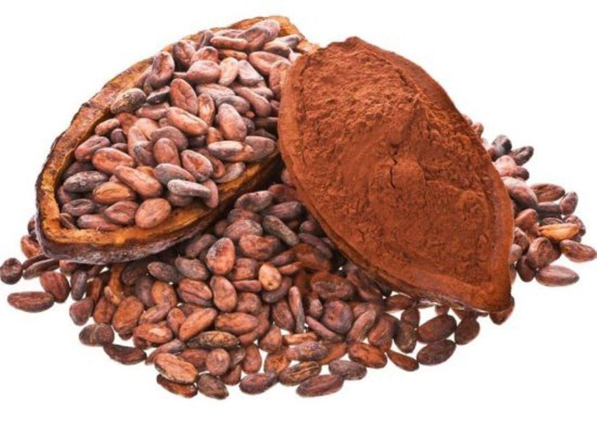 Cocoa Botanical Sheet